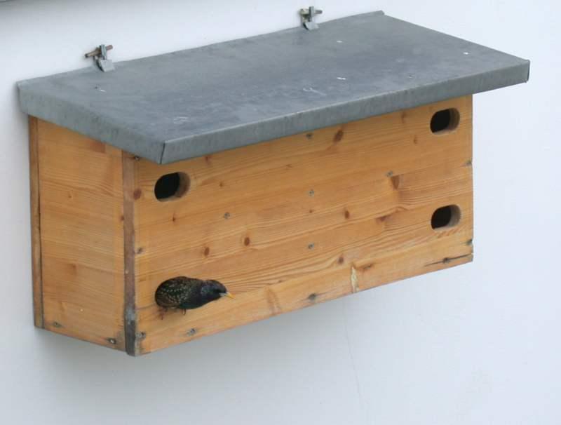 mauersegler fotogalerie 2004 seite 16. Black Bedroom Furniture Sets. Home Design Ideas
